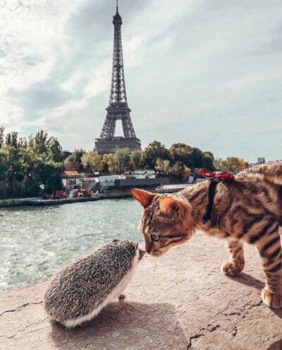 Paris_limonturov